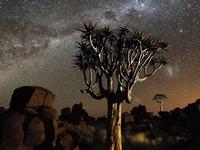 намибийские ночи - миниатюра