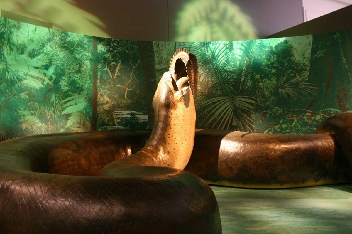 Titanoboa в музее истории Вашингтона
